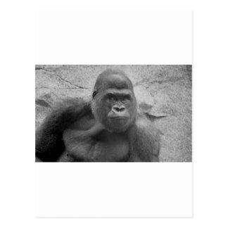 Gorilla Print Postcard