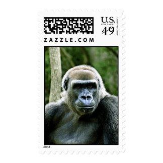 Gorilla Profie Postage Stamp