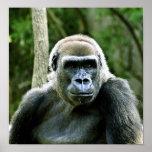 Gorilla Profile Print