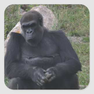 Gorilla sitting square sticker