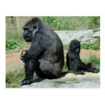 Gorilla Time Out Postcard