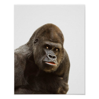 Gorilla wild jungle zoo animal photo poster