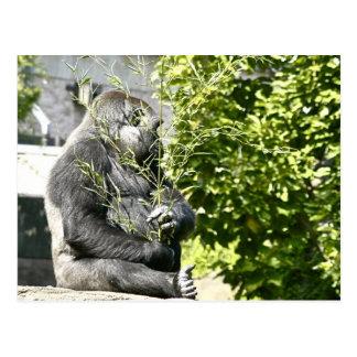 Gorilla with Bouquet Postcard