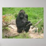 gorillas 002 canvas posters