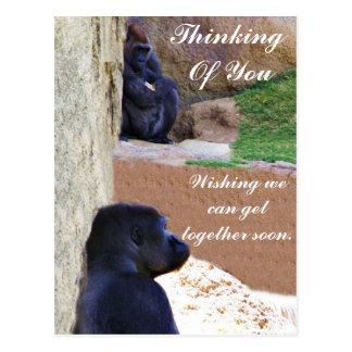 Gorillas_ Post Card