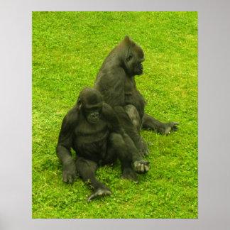 Gorillas poster, wild animals print