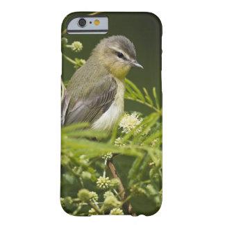 Gorjear un especie de ave (gilvus de un especie de funda barely there iPhone 6