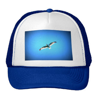 gorra altísimo de la gaviota