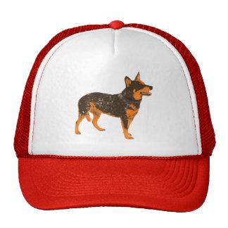 Gorra australiano del perro del ganado