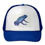 Gorra azul de la rana del dardo del veneno