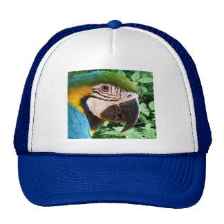 Gorra azul del loro del Macaw
