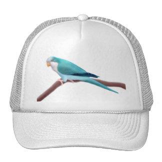 Gorra azul del loro del Quaker