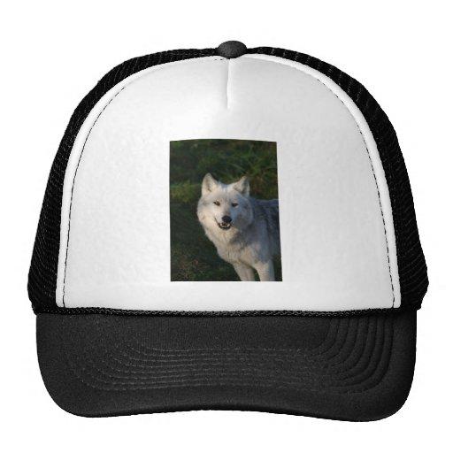 Gorra canadiense del lobo de madera