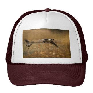 Gorra/casquillo de los gansos de Canadá
