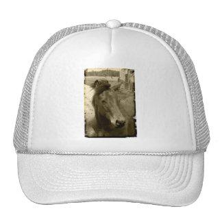 Gorra de antaño de la fotografía del caballo de la