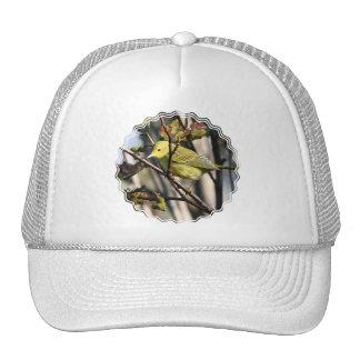 Gorra de béisbol amarillo del Chickadee