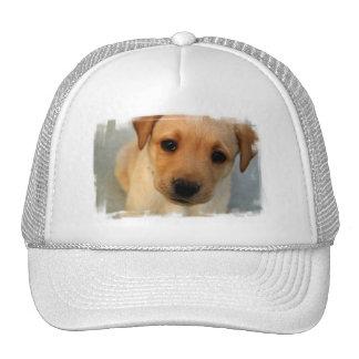 Gorra de béisbol amarillo del perrito del laborato
