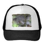 Gorra de béisbol australiano de la koala