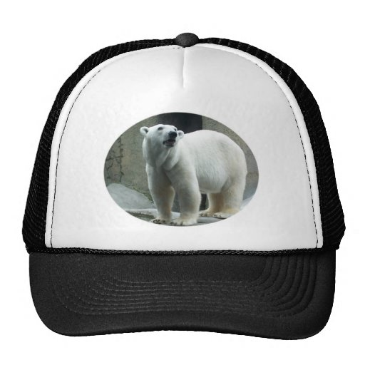 Gorra de béisbol blanco del oso polar