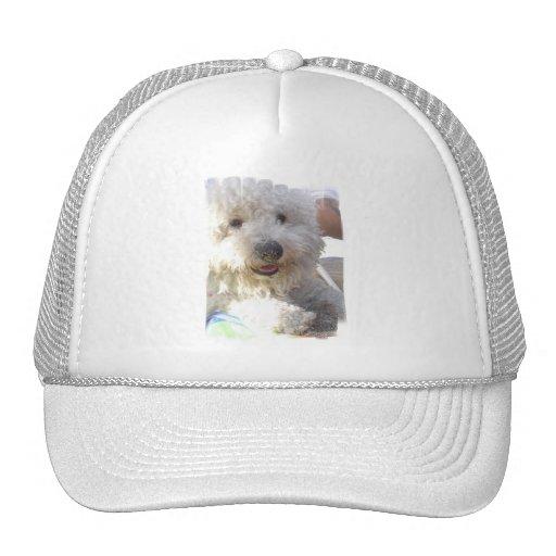 Gorra de béisbol de Bichon Frise