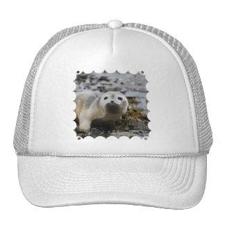 Gorra de béisbol de cría de foca