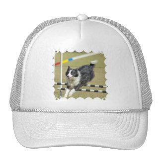 Gorra de béisbol de la agilidad del border collie