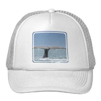 Gorra de béisbol de la cola de la ballena