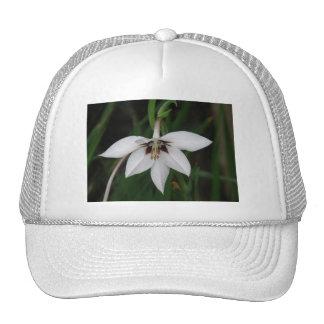 Gorra de béisbol de la flor de la orquídea