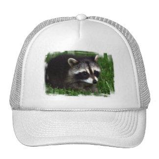 Gorra de béisbol de la foto del mapache