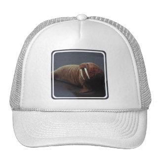 Gorra de béisbol de la morsa