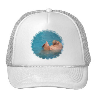 Gorra de béisbol de la morsa que aplaude