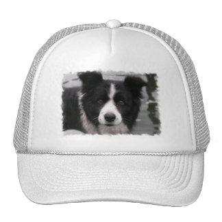 Gorra de béisbol del border collie