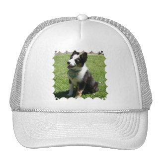 Gorra de béisbol del border collie que se sienta