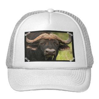 Gorra de béisbol del búfalo de agua