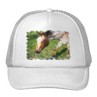 Gorra de béisbol del caballo del Appaloosa