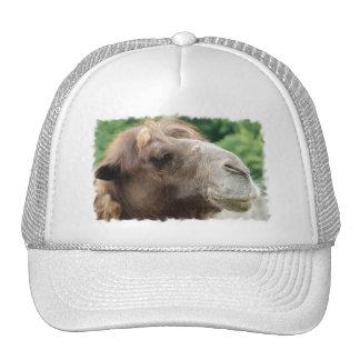 Gorra de béisbol del camello árabe