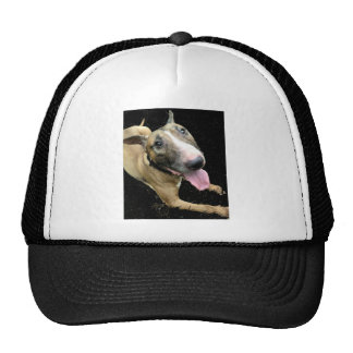 Gorra de béisbol del camionero de bull terrier del