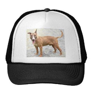 Gorra de béisbol del gorra de bull terrier del ing