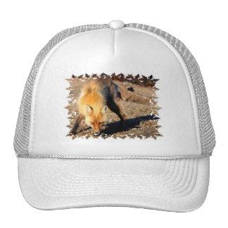 Gorra de béisbol del hábitat del Fox rojo