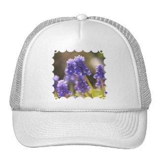 Gorra de béisbol del jacinto de uva