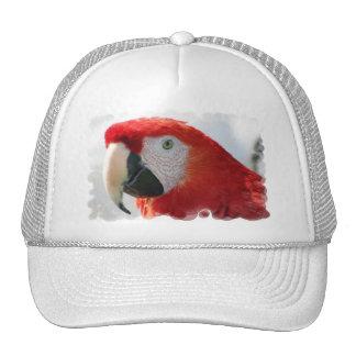 Gorra de béisbol del Macaw del escarlata