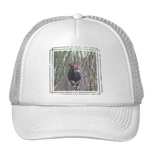 Gorra de béisbol del Okapi