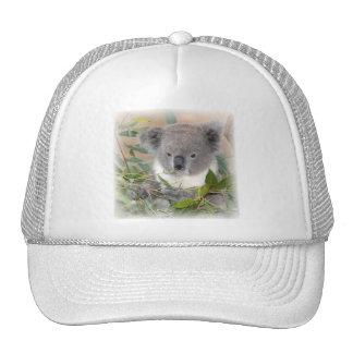 Gorra de béisbol del oso de koala