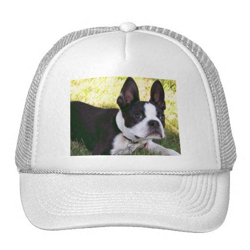 Gorra de béisbol del perrito de Boston Terrier