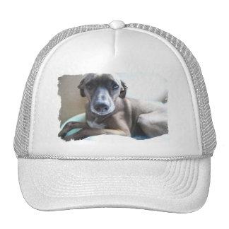 Gorra de béisbol del perrito del galgo