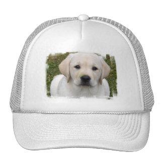 Gorra de béisbol del perrito del golden retriever
