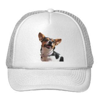 Gorra de béisbol del perro de la chihuahua