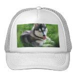 Gorra de béisbol del perro del husky siberiano