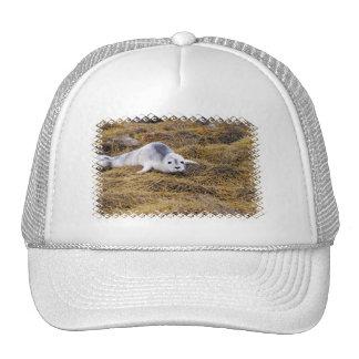 Gorra de béisbol del sello de puerto del bebé
