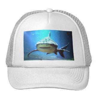 Gorra de béisbol del tiburón